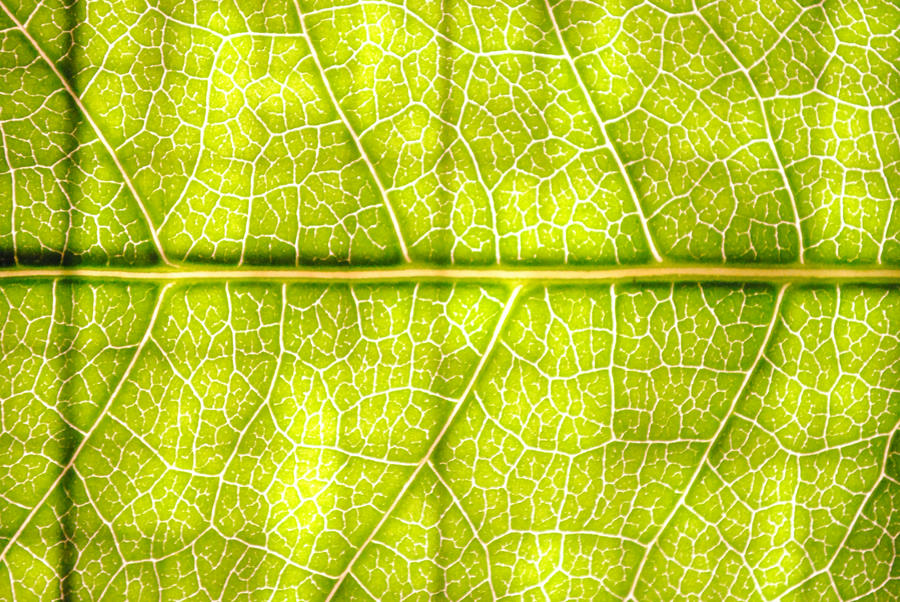 Leaf Texture - Two by dotgfx