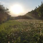 Puffy,sunny meadow