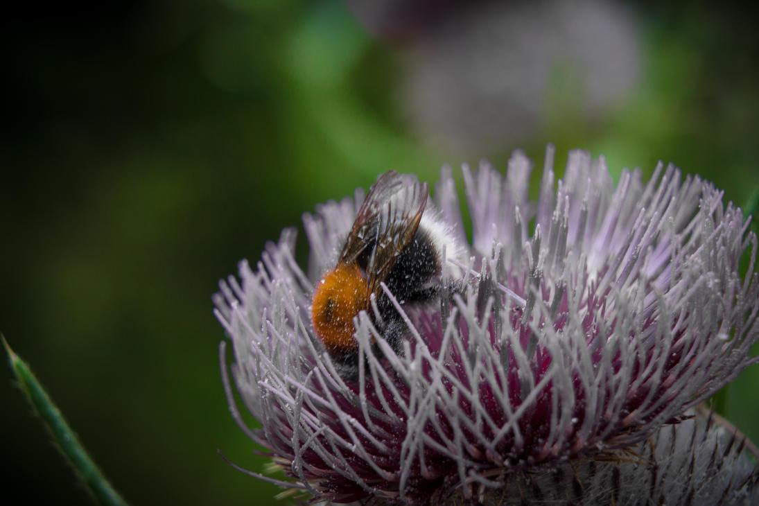 Collecting Pollen.. by EK-Photos