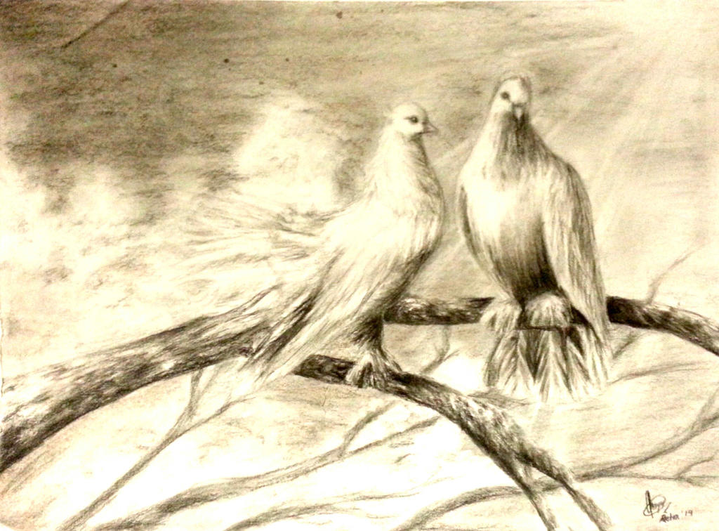 Pigeons by chalollita