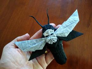 1001 Deaths Head Hawkwing Moth