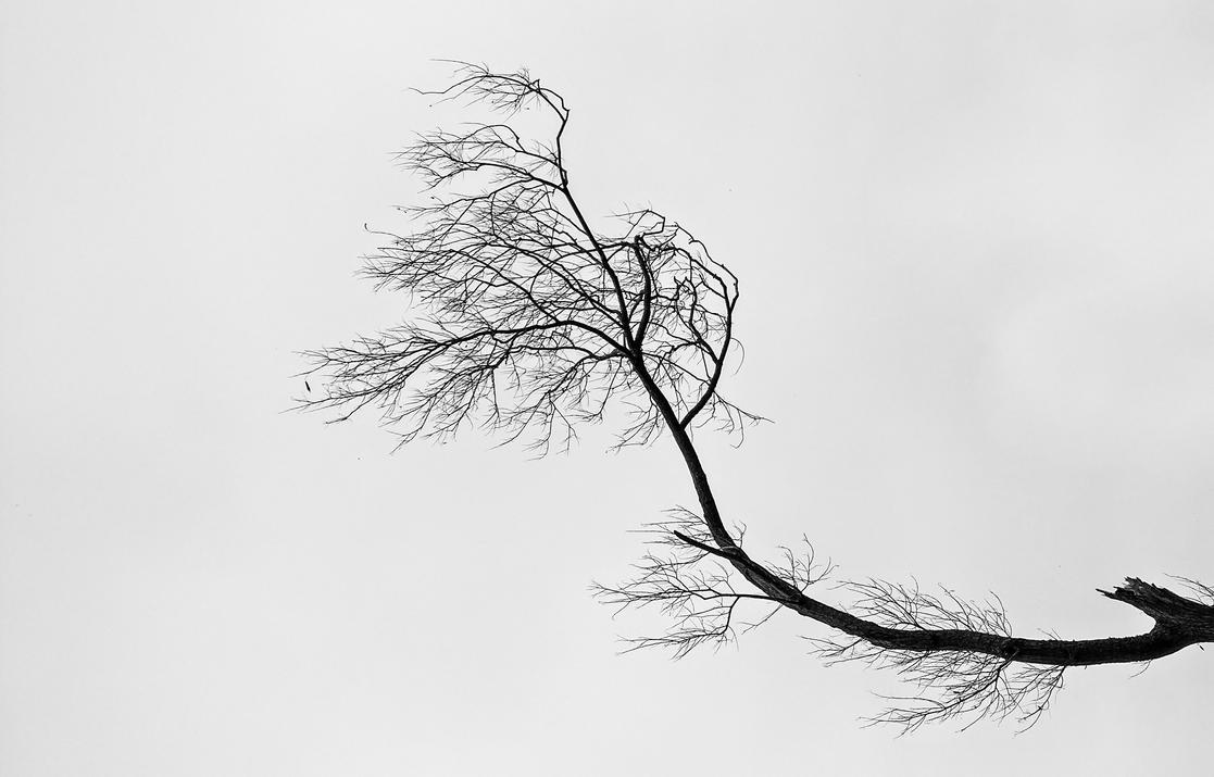 Trees 0.1 by El-Nombre