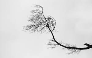 Trees 0.1