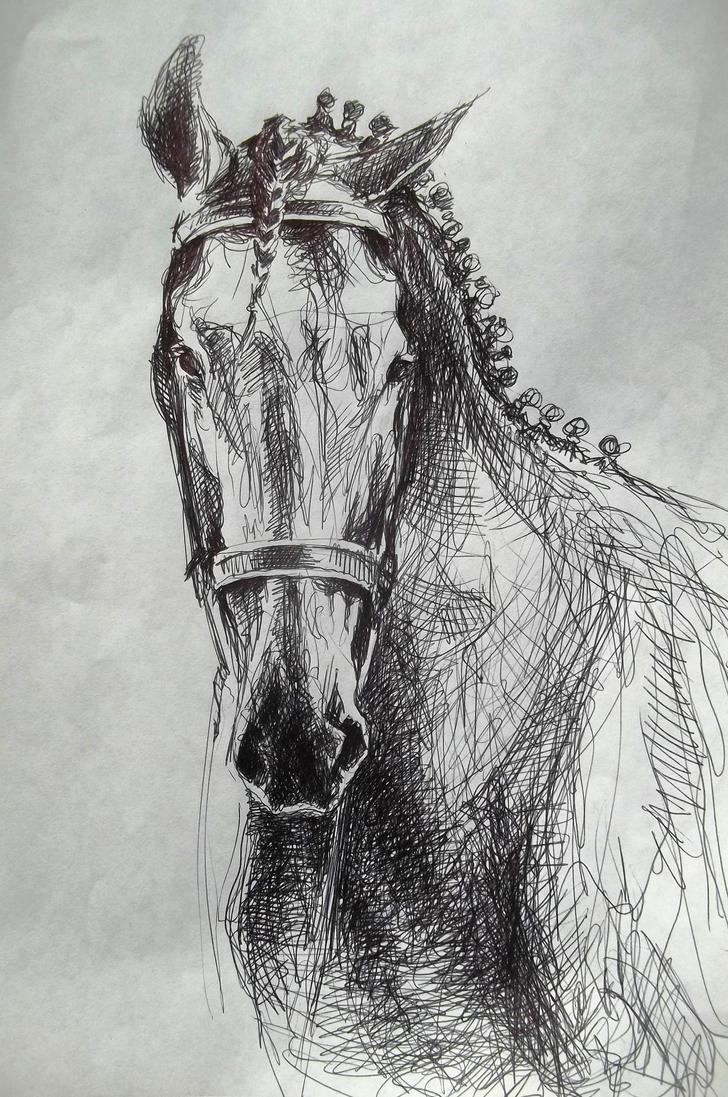 Dressage horse head sketch drawing by CristinaGrinciuc