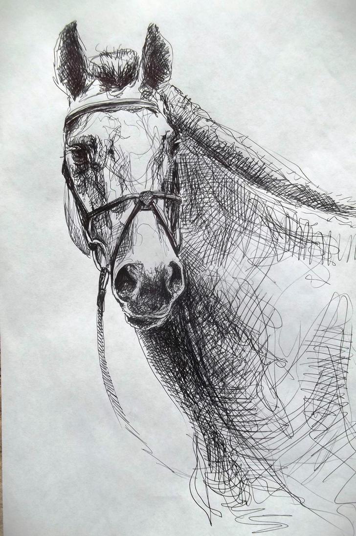 Horse head sketch drawing by CristinaGrinciuc