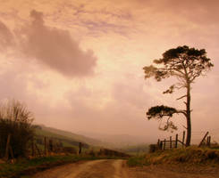 Scots pine by gwilym