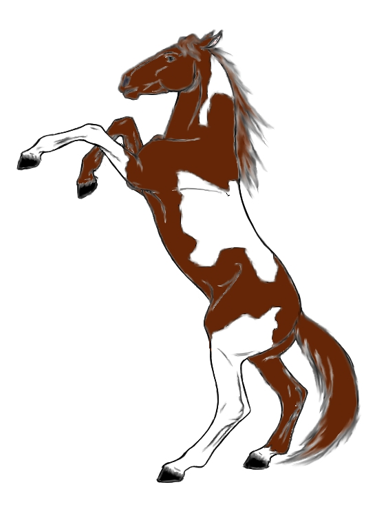 Rearing horse paint horse rearing up by