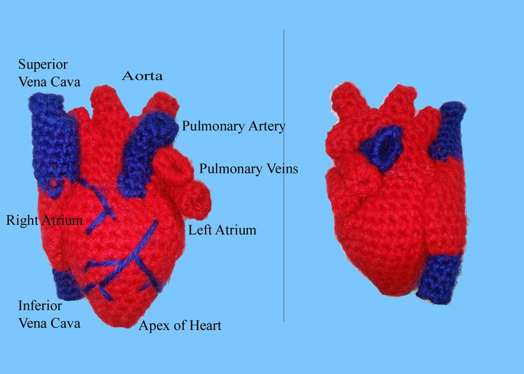 Amigurumi Human Body : Human Heart Realistic Crochet Amigurumi by thesoftscientist