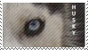 Husky Eyes Stamp by HelloImaginaryFriend
