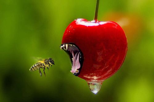 cherry by dumbelek