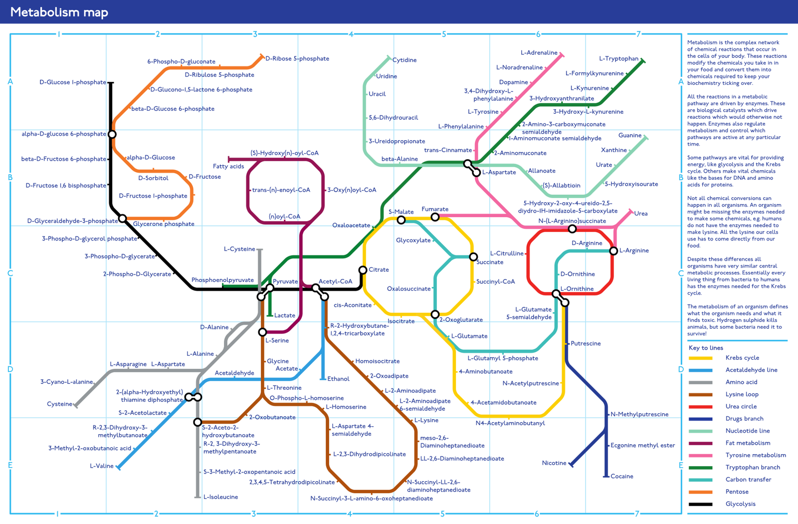 Metabolism Tube Map by zephyris on DeviantArt
