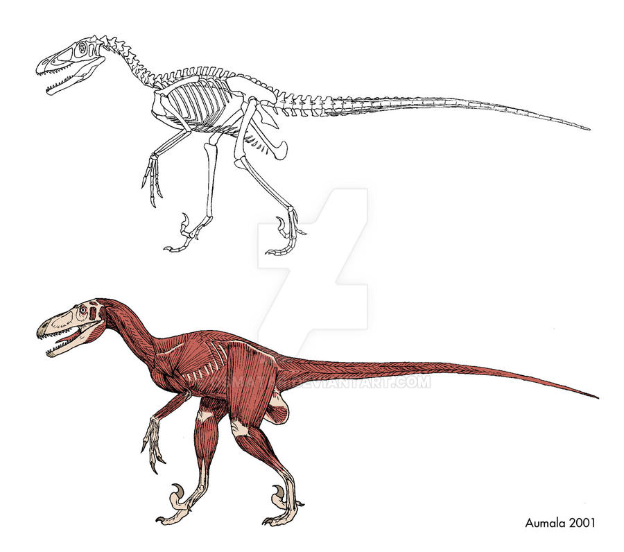 dromaeosaur bones and muscles by osmatar - Coloration Eos