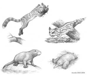 The Speculative Mammal Project
