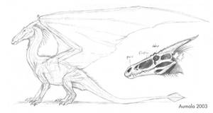 Dragon anatomy sketches