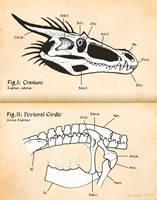 Introduction to Dragon Skeletal Anatomy by Osmatar