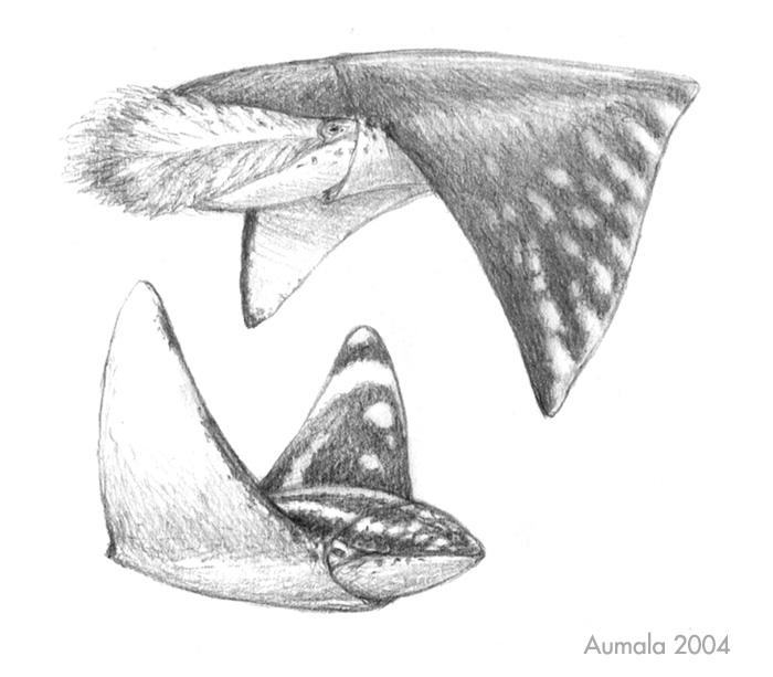 Sea Creatures And Behavior Ideas Dump!~ Let's Help The Dev