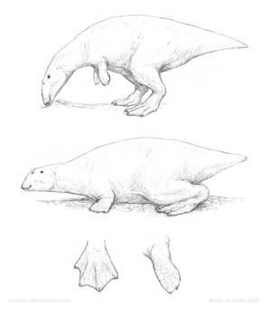 Laticanatidae - The Duckgongs