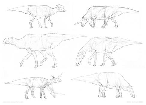 Anatomical sketches: Hadrosauria