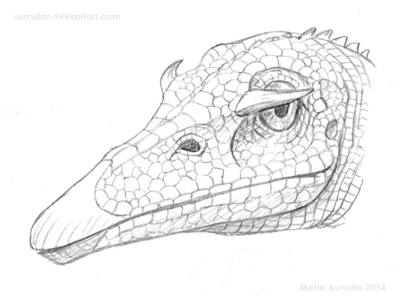 Random Doodle: Ophthalmoceros australis by Osmatar