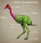 Casuarius, the featherless bird