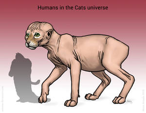 Humans of the Cats universe