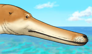 Entirely Serious Kutchicetus Reconstruction