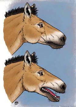 Carnivorous Horse
