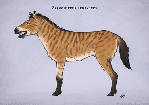 Sarcohippus ephialtes