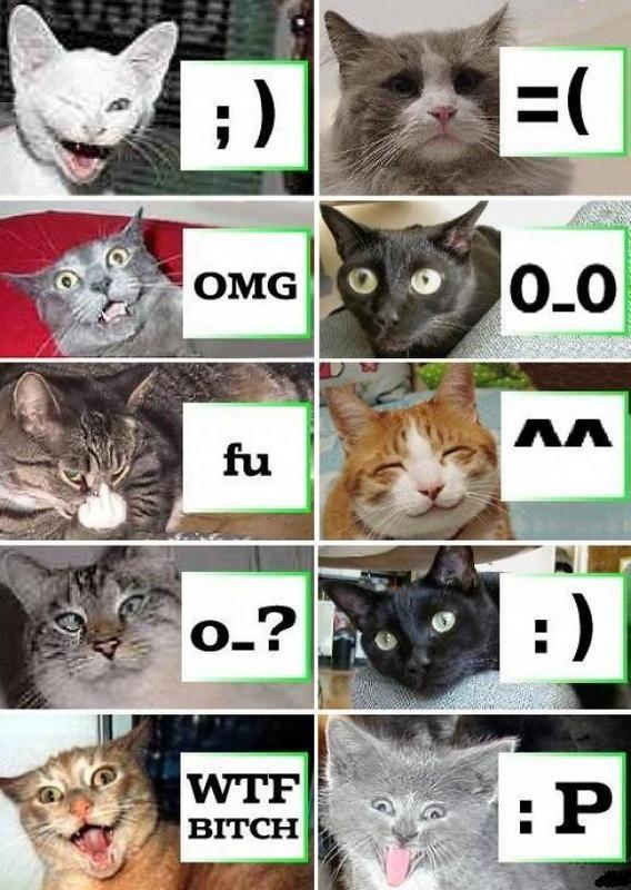 http://fc07.deviantart.net/fs46/f/2009/179/9/0/Cat_Smileys_by_stebo88.jpg