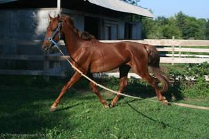 A slow gallop by nfcdakota