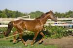 A slow gallop 2
