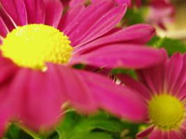 b-day flowers by nfcdakota