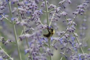 Busy little Bee by nfcdakota