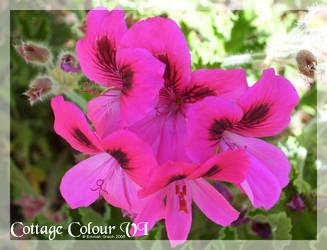 Cottage Colour 06 by bellagurl