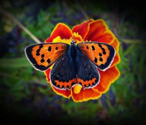 kelebekler her mevsim guzel