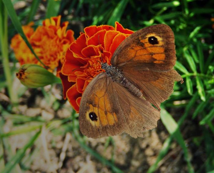 butterflyy by lisans