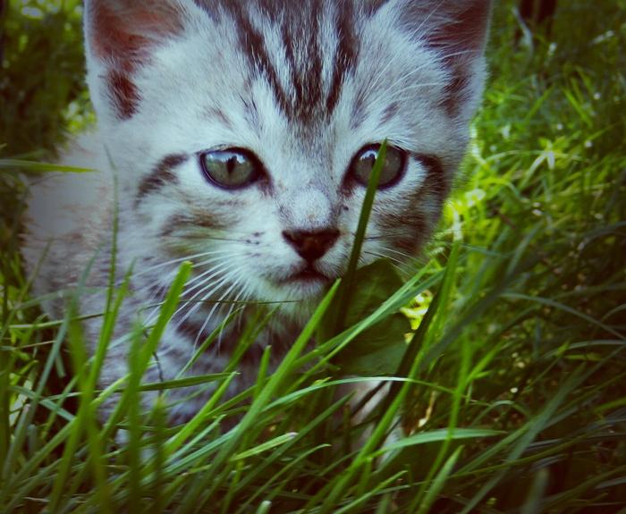 cat by lisans