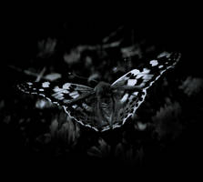 'butterfly by lisans
