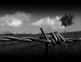 solitude II by lisans