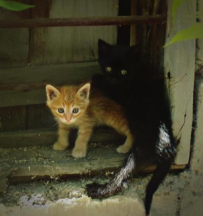 http://fc01.deviantart.net/fs71/i/2010/161/4/4/baby_cats_by_lisans.jpg
