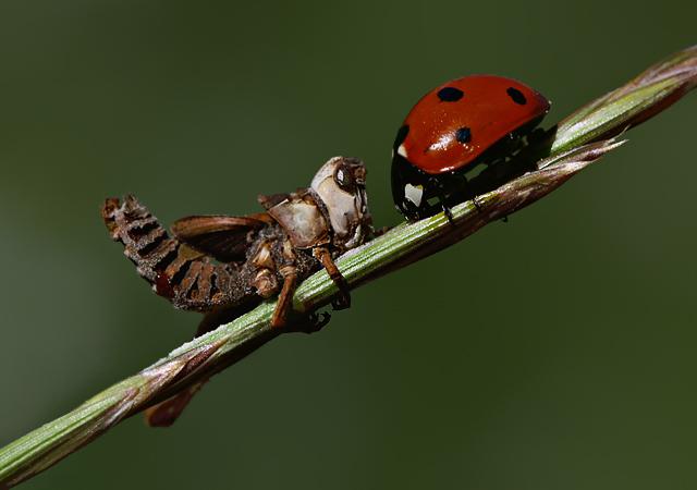 Grasshopper And Ladybug By Lisans On Deviantart