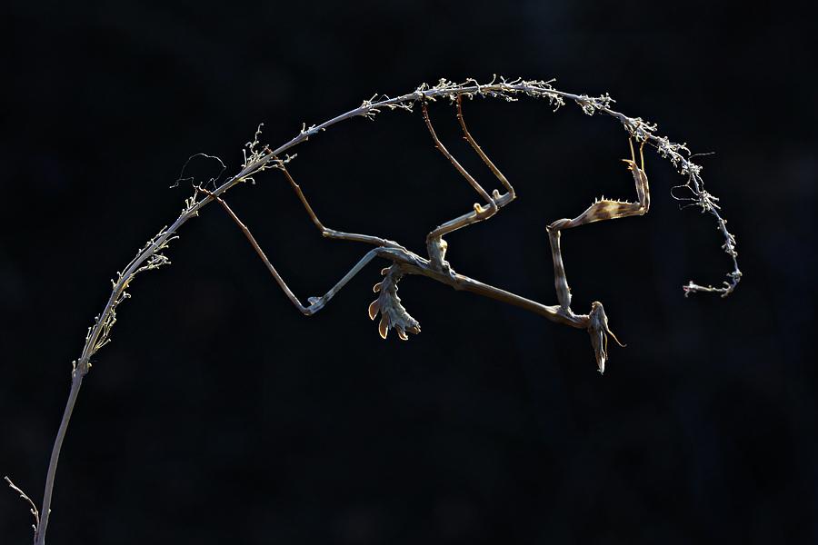 akrobat by lisans