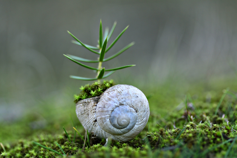 snail by lisans