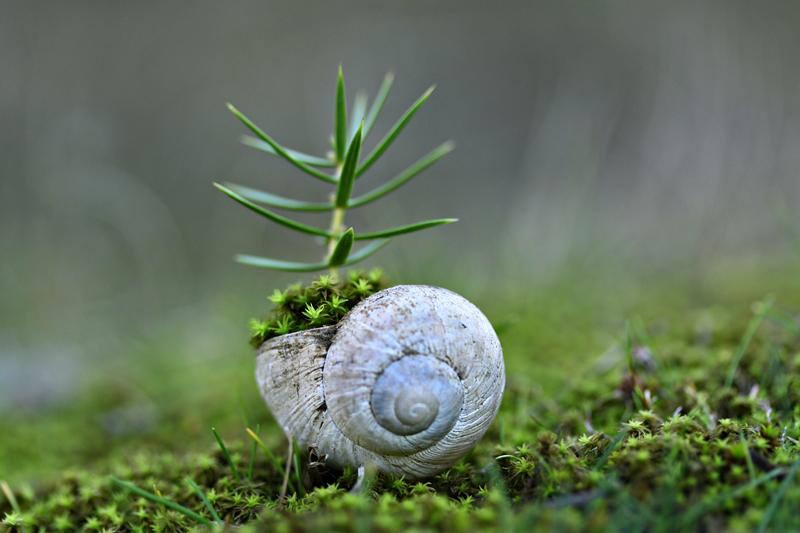 snail by lisans