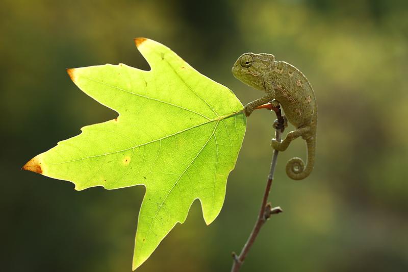 hi autumn by lisans