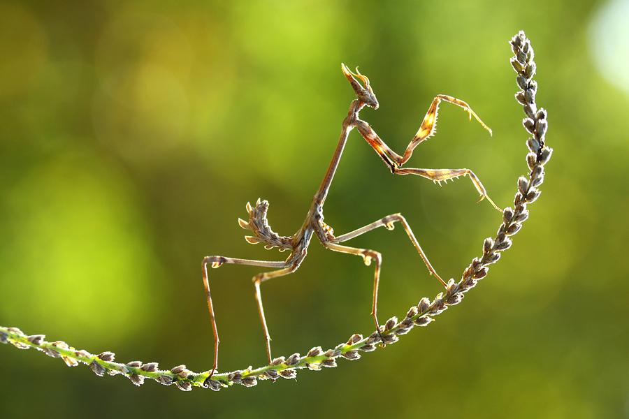 acrobat by lisans
