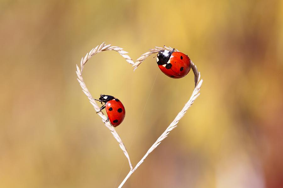 Nature Love By Lisans On DeviantArt