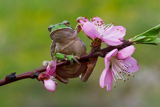 hi spring