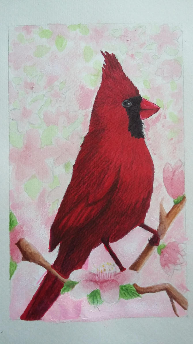 A Nothern Cardinal by lovelypeony