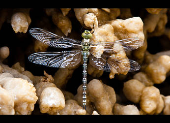 Dragonfly on Salt by LordDrako